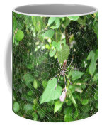 A Spider Web Coffee Mug