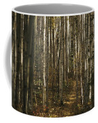 A Stand Of Birch Trees Show Coffee Mug