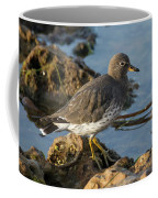 A Surfbird At The Tidepools Coffee Mug