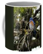 A Western Bluebird In A Tree Coffee Mug
