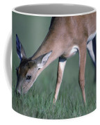 A White-tail Deer Munches On Some Green Coffee Mug
