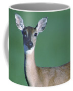 A White-tailed Deer On The Prairie Coffee Mug