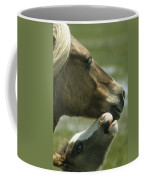 A Wild Pony Foal Nuzzling Its Mother Coffee Mug
