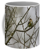 A Yellow-rumped Warbler In The Evening Coffee Mug
