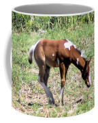 A Young Painted Colt  Coffee Mug