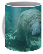 About To Meet A Manatee Coffee Mug