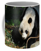 Absolutely Beautiful Giant Panda Bear With A Sweet Face Coffee Mug
