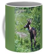 Acadia Buck 2 Coffee Mug