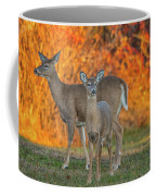 Acadia Deer Coffee Mug