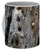 Acorn Woodpecker Cache, Sequoia National Park, Ca  September 2016 Coffee Mug