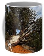 Across The Path Coffee Mug