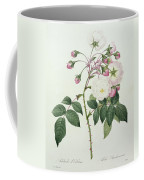 Adelia Aurelianensis Coffee Mug by Pierre Joseph Redoute
