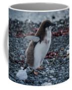 Adelie Penguin Chick Running Along Stony Beach Coffee Mug