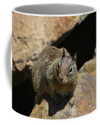 Adorable Up Close Look Into The Face Of A Squirrel Coffee Mug