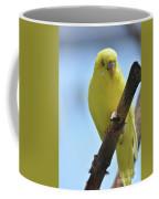 Adorable Yellow Budgie Parakeet Bird Close Up Coffee Mug