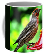 Adult Male House Finch Coffee Mug