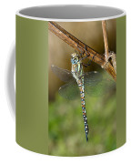 Aeshna Mixta Dragonfly Coffee Mug