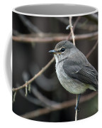 African Dusky Flycatcher Coffee Mug