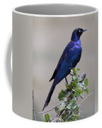 African White Eye Starling Coffee Mug