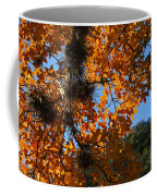 Afternoon Light On Maple Leaves Coffee Mug