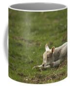 Afternoon Nap Coffee Mug