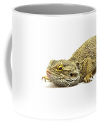 Agama Lizard  Coffee Mug