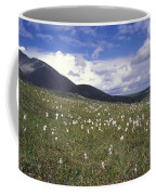 Alaska Cotton Eriophorum Scheuchzeri Coffee Mug