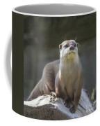 Alert Otter Amblonyx Cinerea Coffee Mug