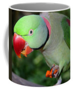 Alexandrine Parrot Feeding Coffee Mug