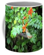 Allen's Hummingbird In Cape Honeysuckle Coffee Mug