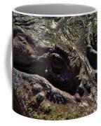 Alligator Eye Coffee Mug