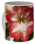 Amaryllidaceae Hippeastrum Stargazeramarylllis Coffee Mug