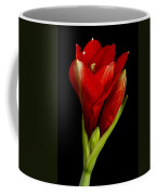 Amaryllis 12-23-2010 Coffee Mug