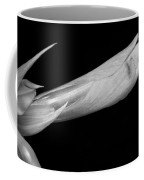 Amaryllis About To Bloom In Black And White Coffee Mug