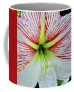 Amaryllis Beauty Coffee Mug