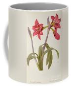 Amaryllis Brasiliensis Coffee Mug