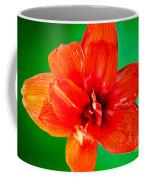 Amaryllis Contrast Orange Amaryllis Flower Appearing To Float Above A Deep Green Background Coffee Mug