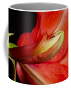 Amaryllis Flower About To Bloom Coffee Mug