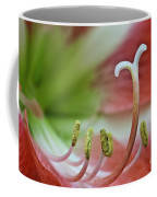 Amaryllis Flower Coffee Mug