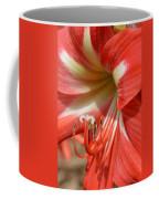 Amaryllis Macro Coffee Mug