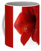 Amaryllis On White 3 Coffee Mug