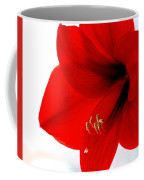 Amaryllis Square Coffee Mug