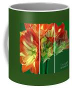 Amaryllis Triptych Coffee Mug