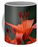 Amazing Blooming Orange Lilies Flowering In A Garden  Coffee Mug