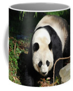Amazing Sweet Chinese Giant Panda Bear Walking Around Coffee Mug