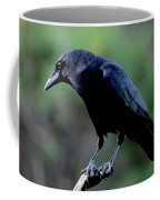 American Crow In Thought Coffee Mug