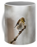 American Golden Finch Winter Plumage 1 Coffee Mug