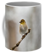 American Golden Finch Winter Plumage 4 Coffee Mug