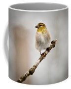 American Golden Finch Winter Plumage 6 Coffee Mug