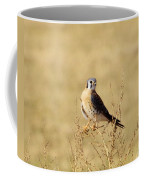 American Kestral Coffee Mug